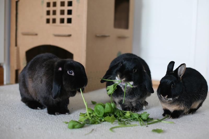 Petter, Harald og Melis koser seg med urter. Sunne godbiter.   Foto: Marit Emilie Buseth