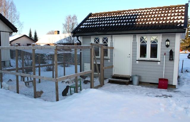 Her bor det tre glade kaniner med tilgang til isolert hus og løpegård.  Foto: Kristine Røhn Gisholt