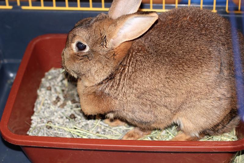 Apatisk og trist kanin  Foto: Marit Emilie Buseth