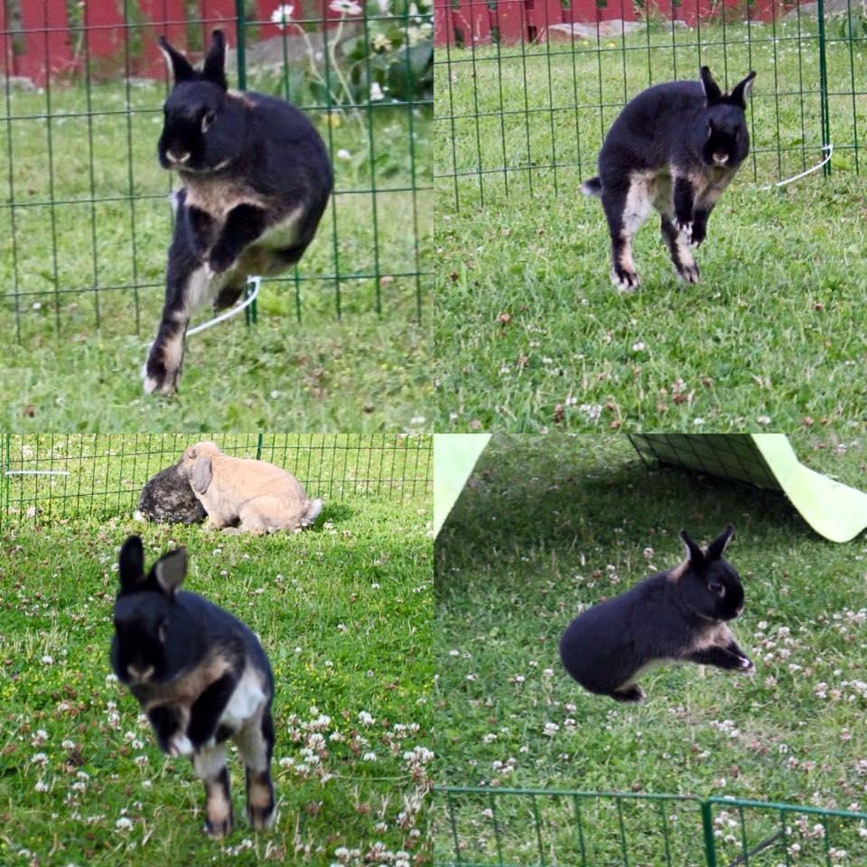 Melis på 10 år er både sosial, leken og i bra form. Hun har gode muligheter til å være aktiv og oppføre seg som en kanin.  Foto: Marit Emilie Buseth