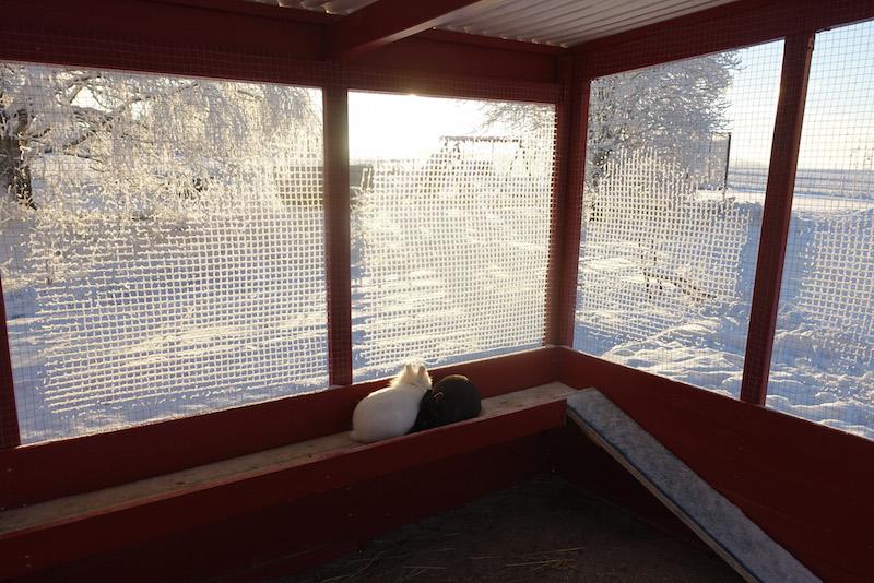 Kaizer og Constanza gleder seg over å både være ute og inne på vinteren. Legg merke til leveggen og hyllene . Foto : Anett Nyborg