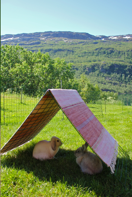 Jeg lagde et telt  Foto: Marit Emilie Buseth