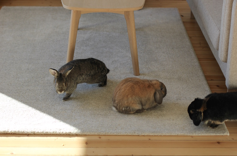 På stua har sofabordet runde bein mens sofaen har rette bein. Begge i eik. De kan gjerne spise på møblene, kaninene bor jo tross alt her, men det gjør jo ikke noe at de lar være heller. Bordet får stå i fred.
