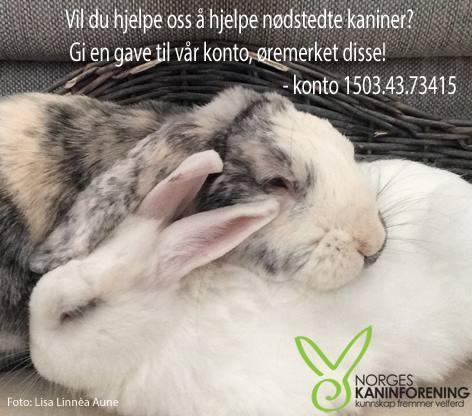 kaninforeningen, kaninoppdrett