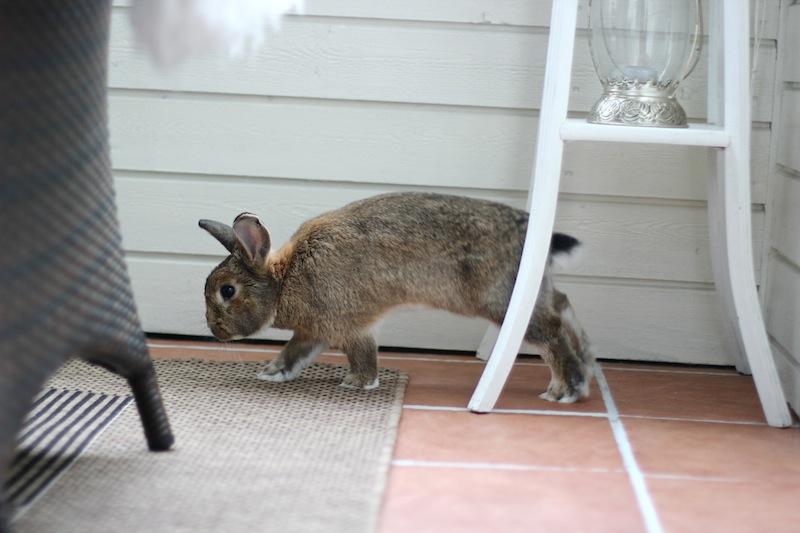 Bajas var glad i verandaen sin.  Foto: Marit Emilie Buseth