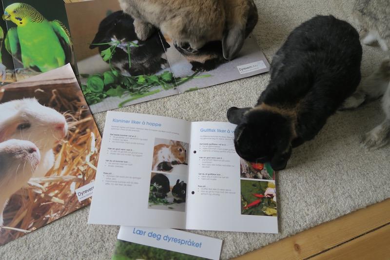 Harald ser frem til å lære landets småbarn om kaniner