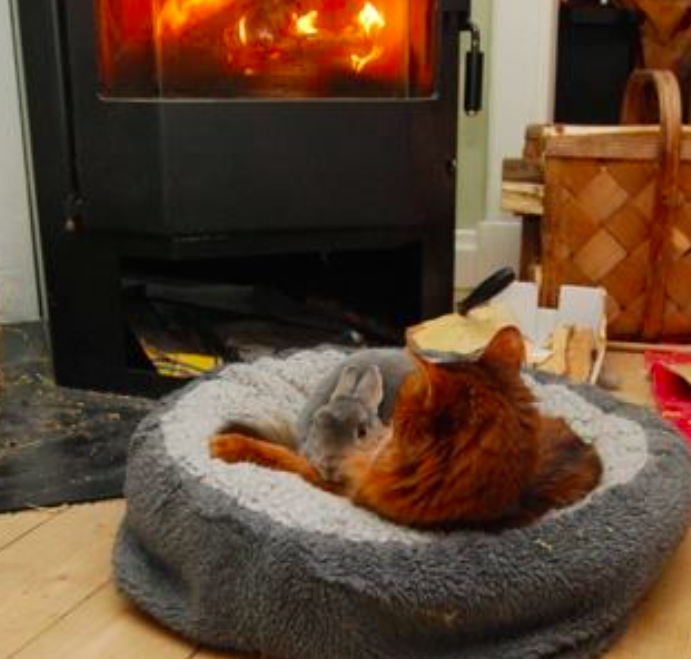 Kahlo tar seg til rette, både inne og ute. Husets katt deler gjerne senga si.