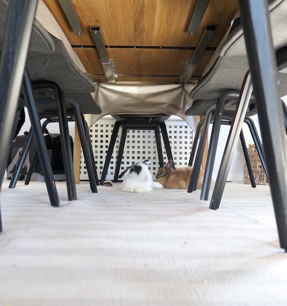 Et kongerike under et spisebord. Kaninbolig i bakgrunnen.