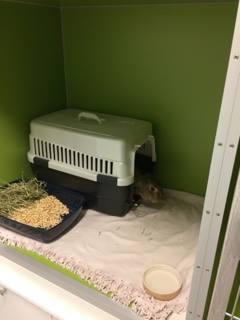 Fin oppstalling av kaniner på klinikken.