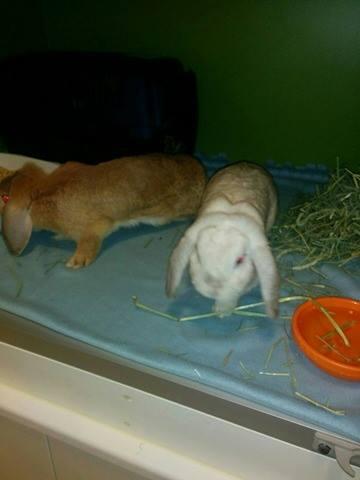 Fin oppstalling for kaniner på klinikken