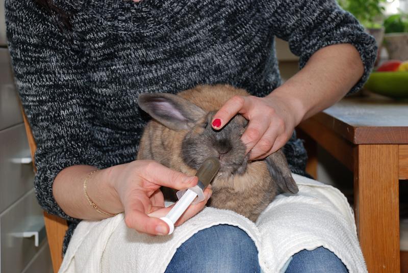 Kaninen min spiser ikke - Hva skal jeg gjøre?