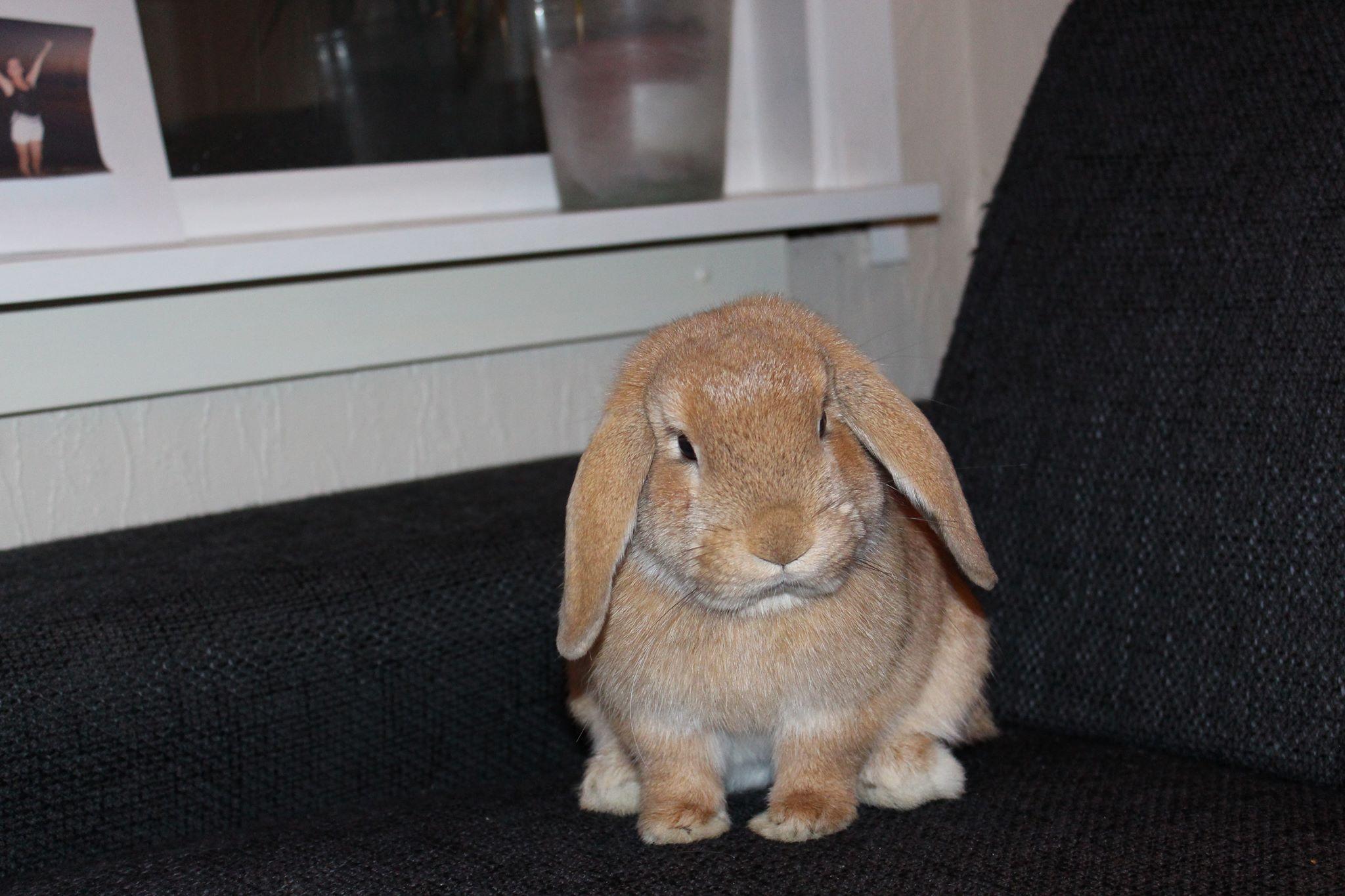 kaninboka.jpg