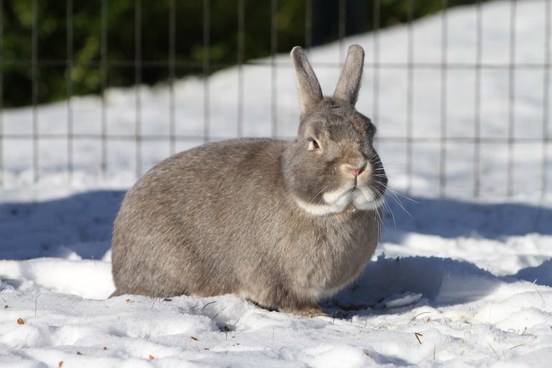 Hvem er den stiligste kaninen i landet her?