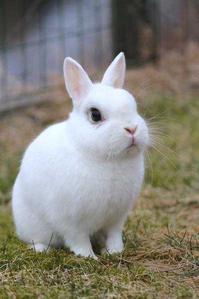 bergen+kanin.JPG