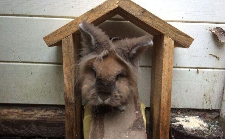 Hvordan bygge kaninhus og utegård? -