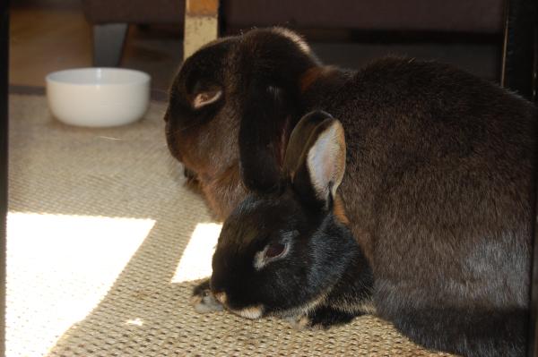Melis har alltid elsket nærhet. Å bli sovet på er godt.