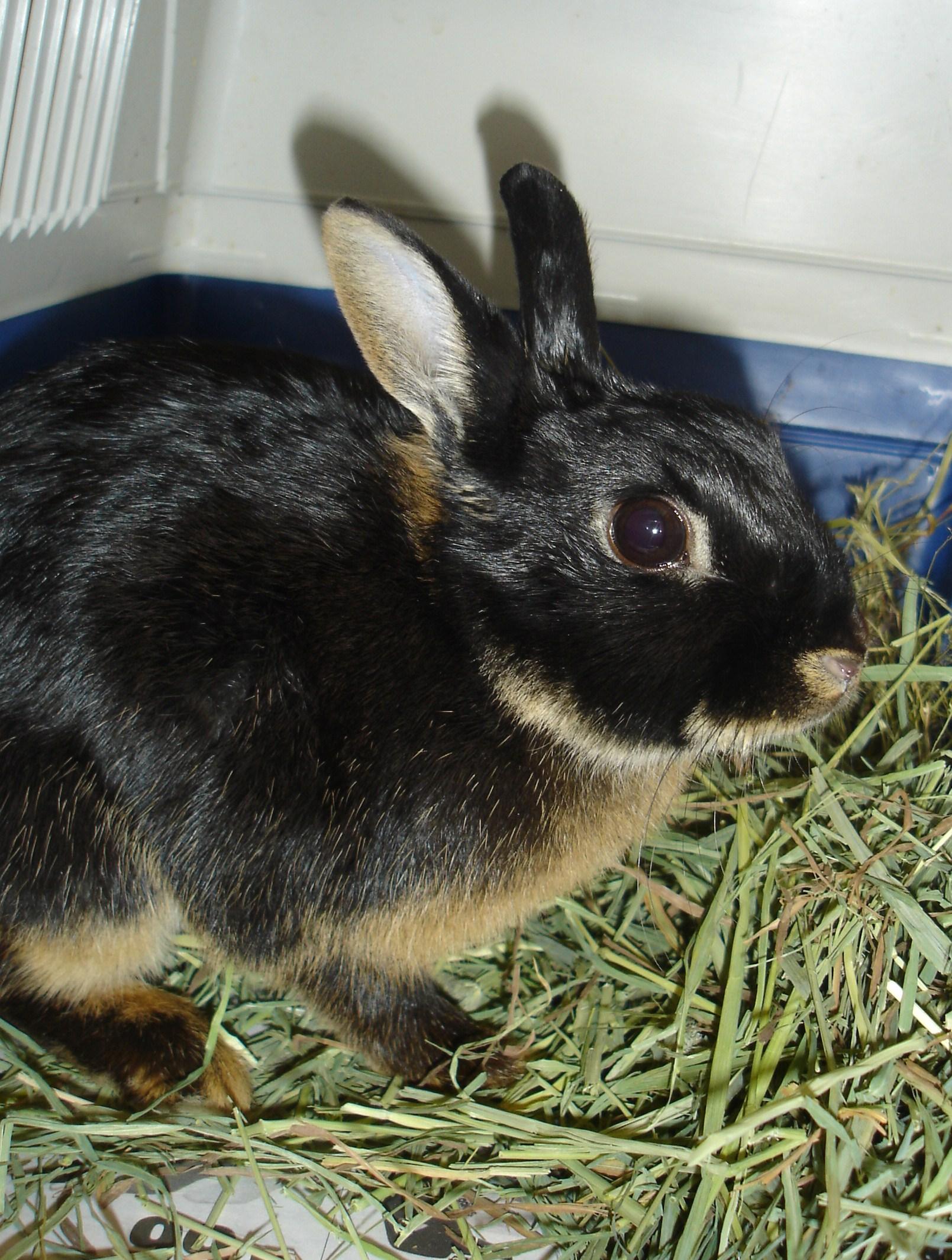 Jeg var på dyreklinikken Dyrebeskyttelsen Oslo og Akershus brukte på kanin,da Melis ble levert inn. Jeg fikk beskjed om å finne et navn til henne og kalte henne Melis etter en rotte jeg hadde da jeg vokste opp. Jeg sa også med det samme at jeg ville adoptere henne selv.... og sånn ble det. Kjærlighet ved første blikk. Gratulerer med dagen Melis