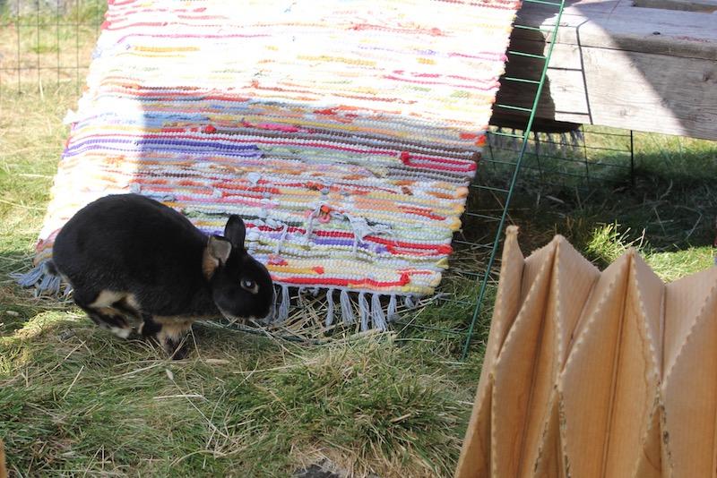 Melis var veldig kvikk og hadde en aktiv og fin sommer