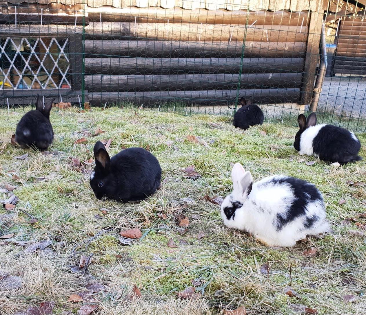 Kaniner+Bergen