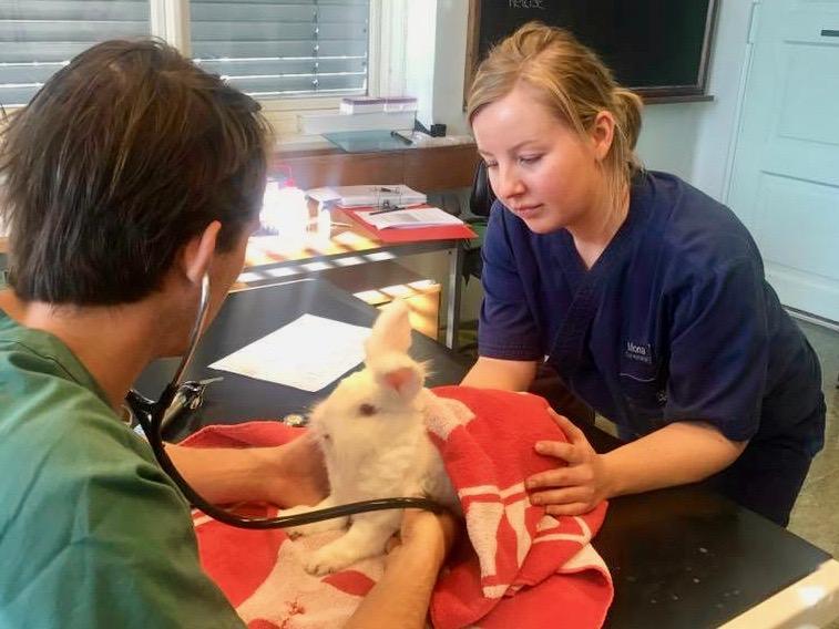 Veterinær og dyrepleier undersøker Kokos