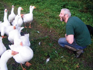 Thomas having fun with their geese on Manna Organic Farm on the Dingle Penninsula in Co.Kerry, Ireland