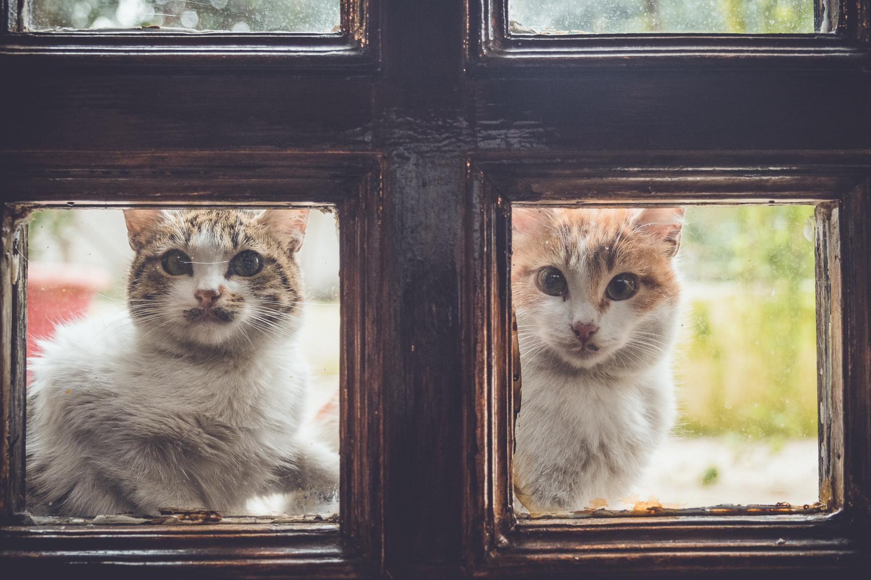 Kittens in the Despina restaurant