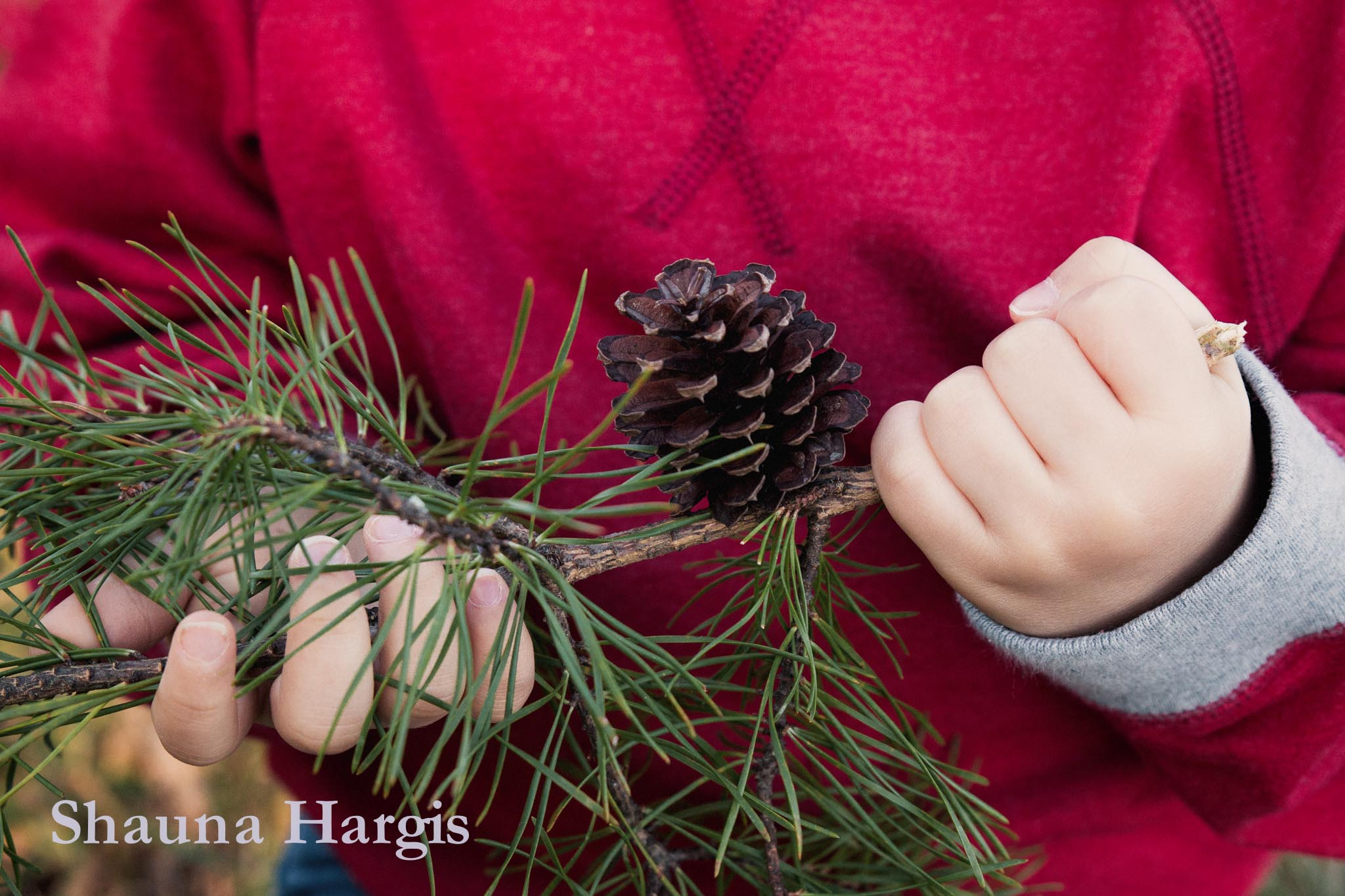 pine-cone-in-hand.jpg