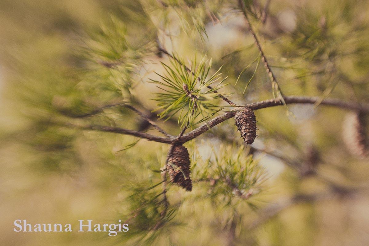 blurry-pine.jpg