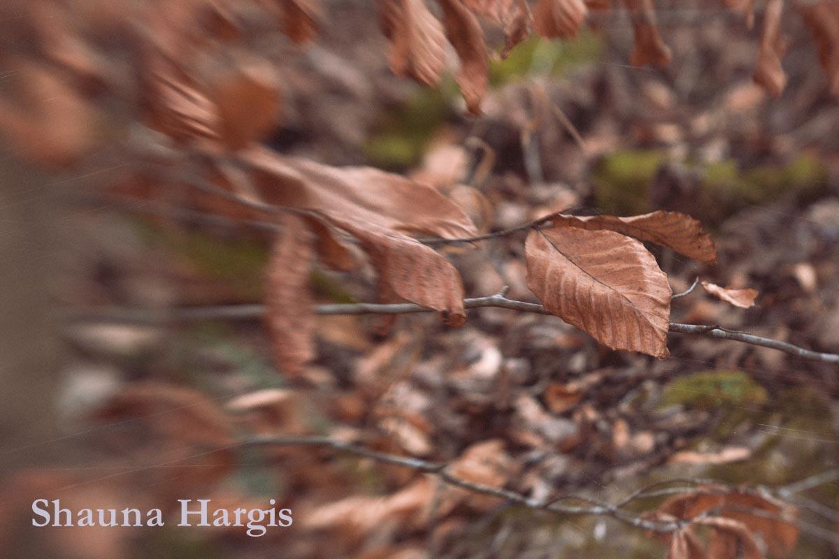 leftover-leaves.jpg