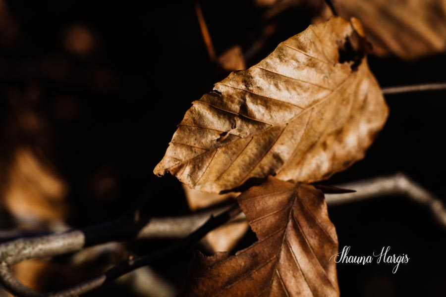 Shauna Hargis Photography - Lensbaby Edge 80 - Nature Photography
