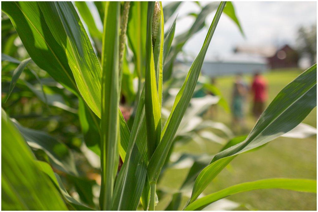 brown-farm-2013-4.jpg