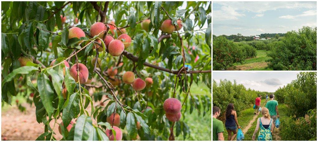 brown-farm-2013-65.jpg