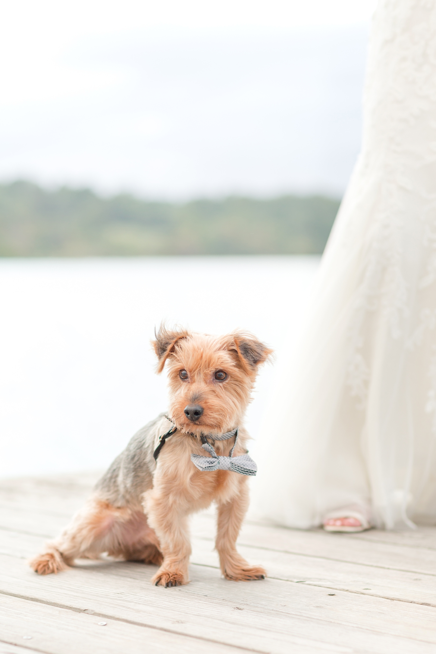 SCOTT WEDDING HIGHLIGHTS-385_herrington-on-the-bay-maryland-wedding-photographer-anna-grace-photography-photo.jpg