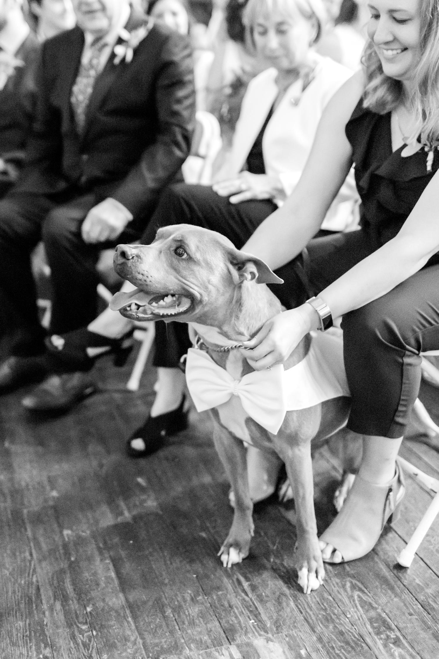 Matt & Angel Skarzynski Wedding WEDDING HIGHLIGHTS-99_2640-Space-wedding-Baltimore-Maryland-wedding-photographer-Patapsco-State-Park-engagement-anna-grace-photography-photo.jpg