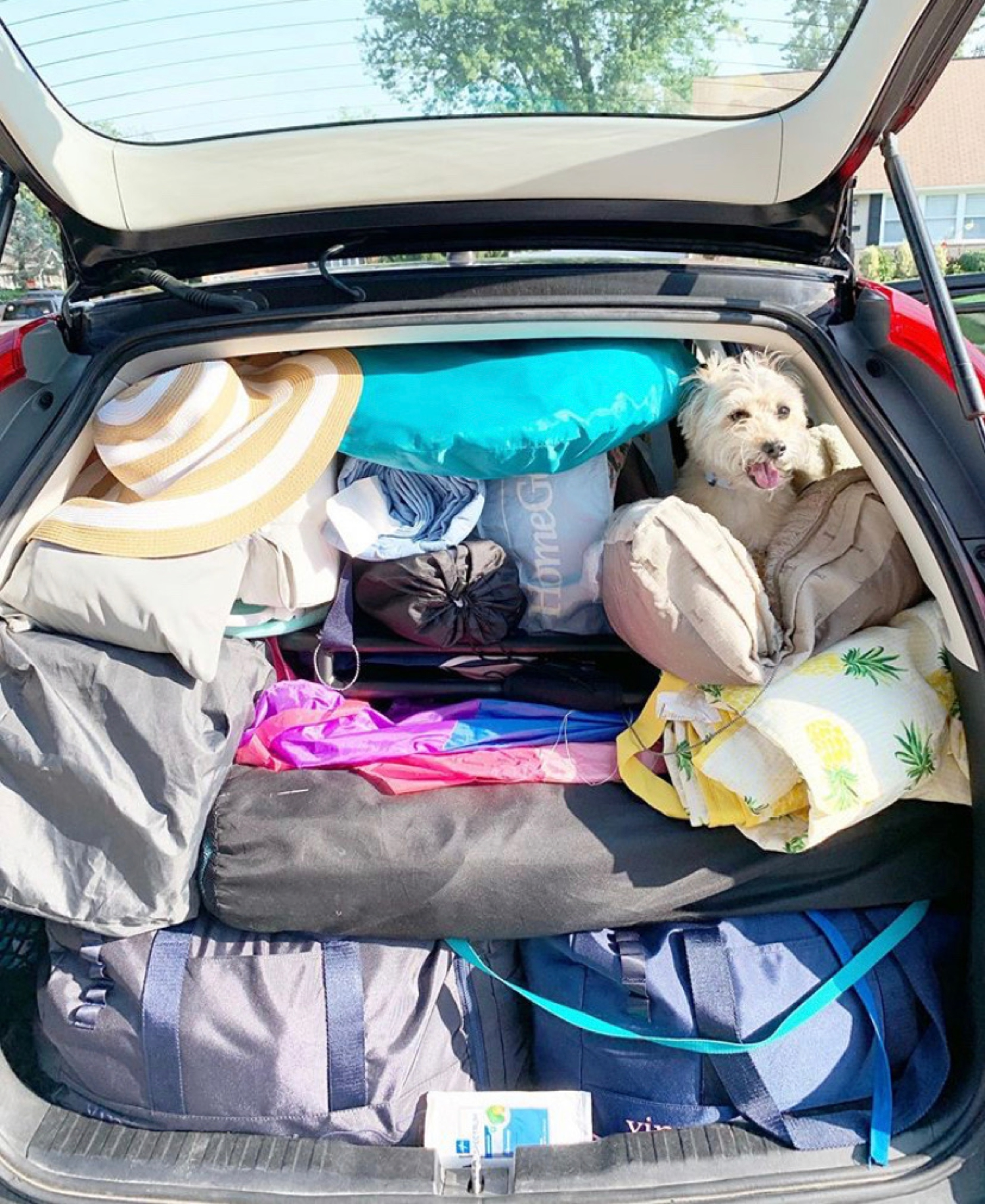We somehow fit it all with the pup!