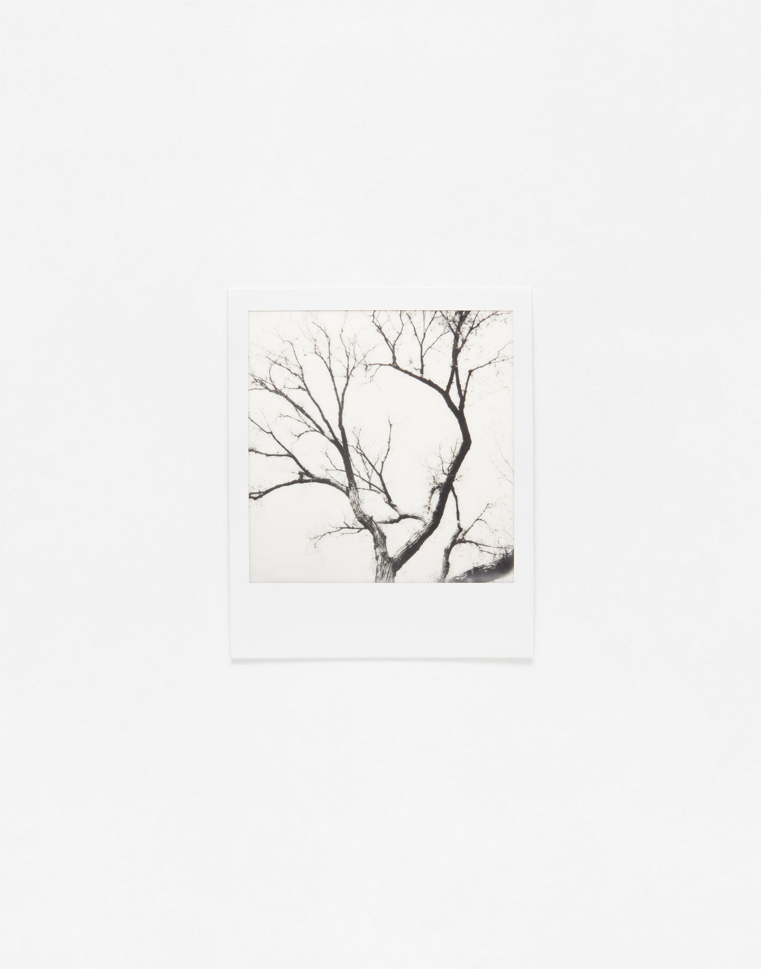 180331_Polaroid_0028_test.jpg