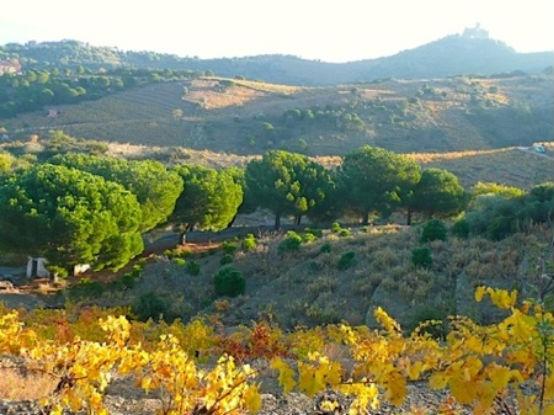 223201013419119_Autumn Collioure Hills.jpg