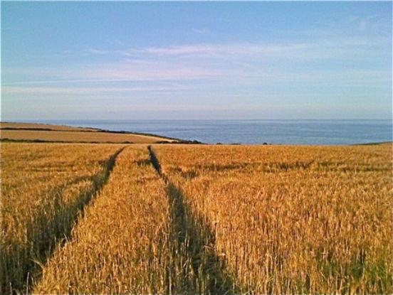 263201014037112_Before Harvest.jpg