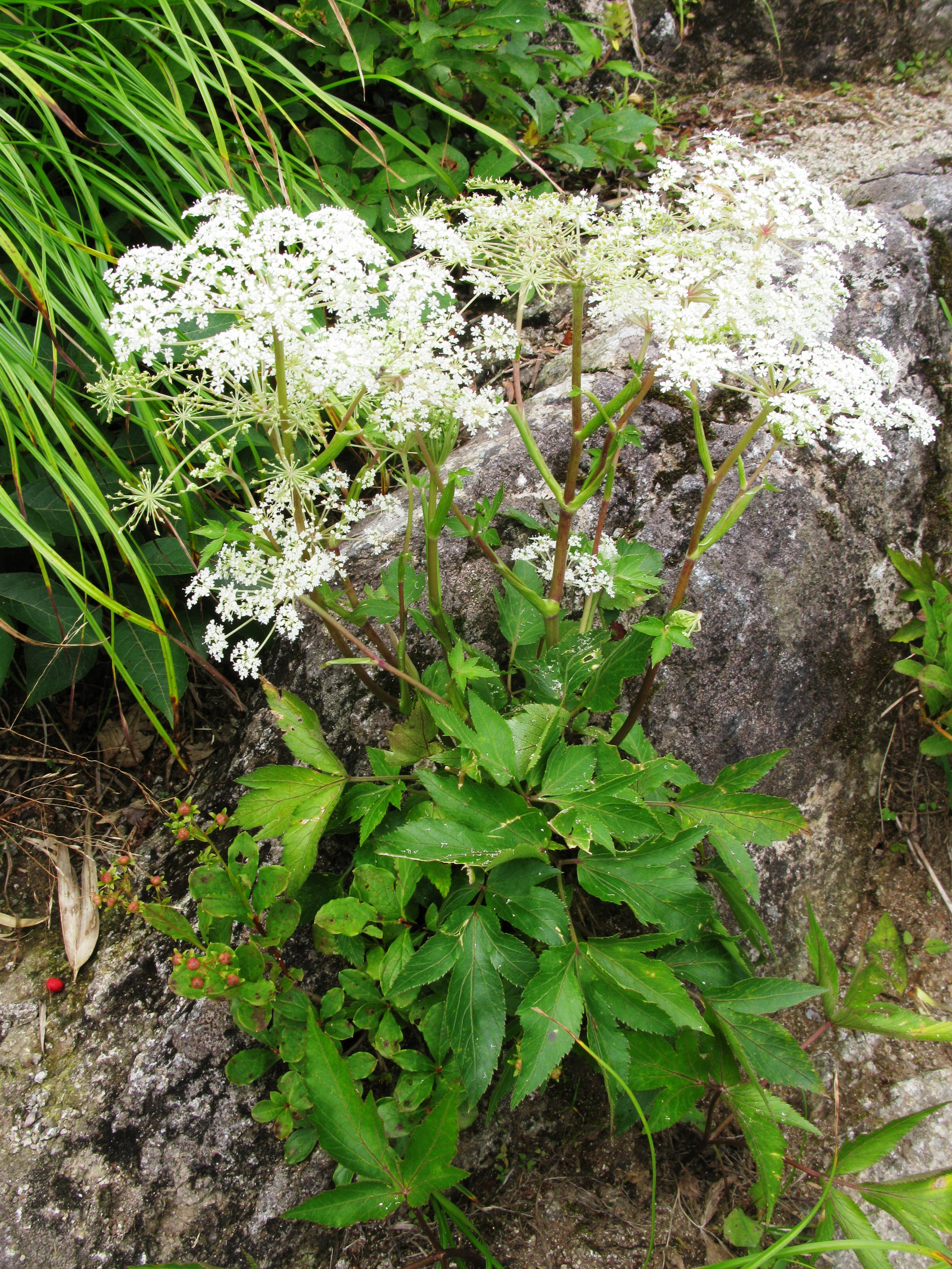 Herbs A-Z — Tangled Roots Herbal - Spiritual/Herbal/Psychic/Massage