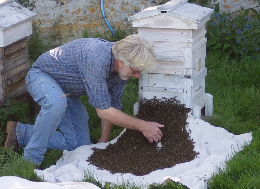 © The Natural Beekeeping Trust
