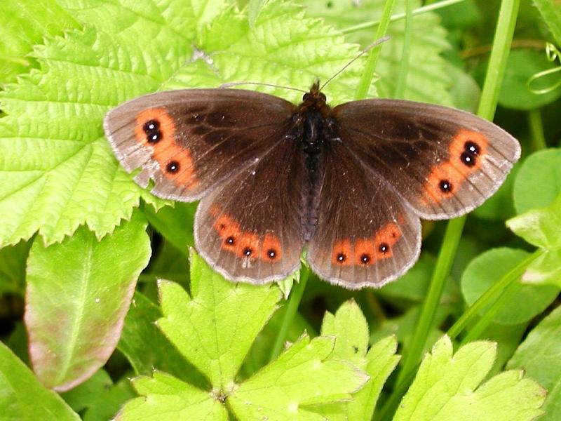 ©The Scottish Wildlife Trust