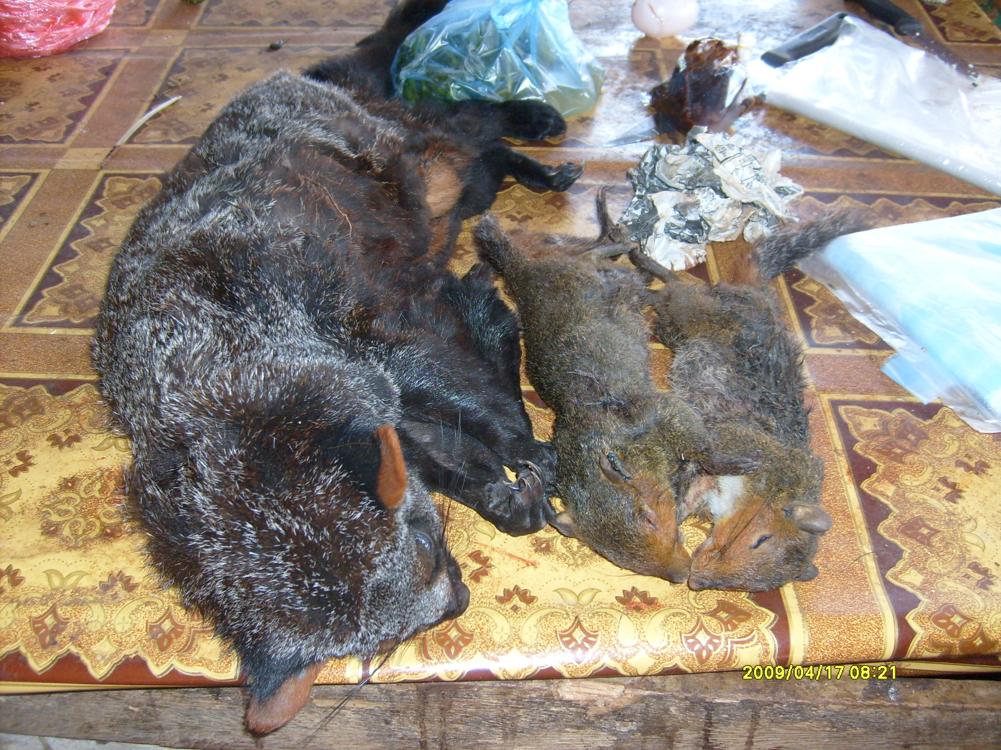 Lemurs, squirrels, porcupines, roosters, dogs, and other animals could be found, completely intact, lying on tables everywhere. Most of them had likely been shot the day before.