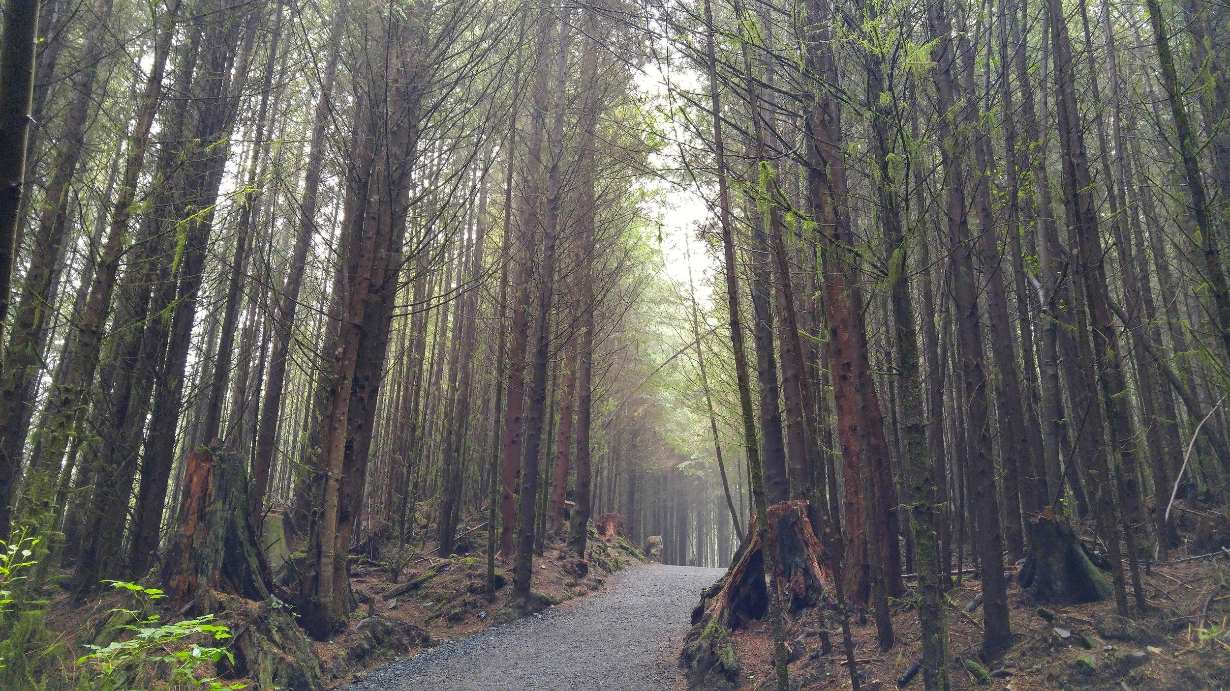 A forest along Sooke Road. I call it  Mirkwood .