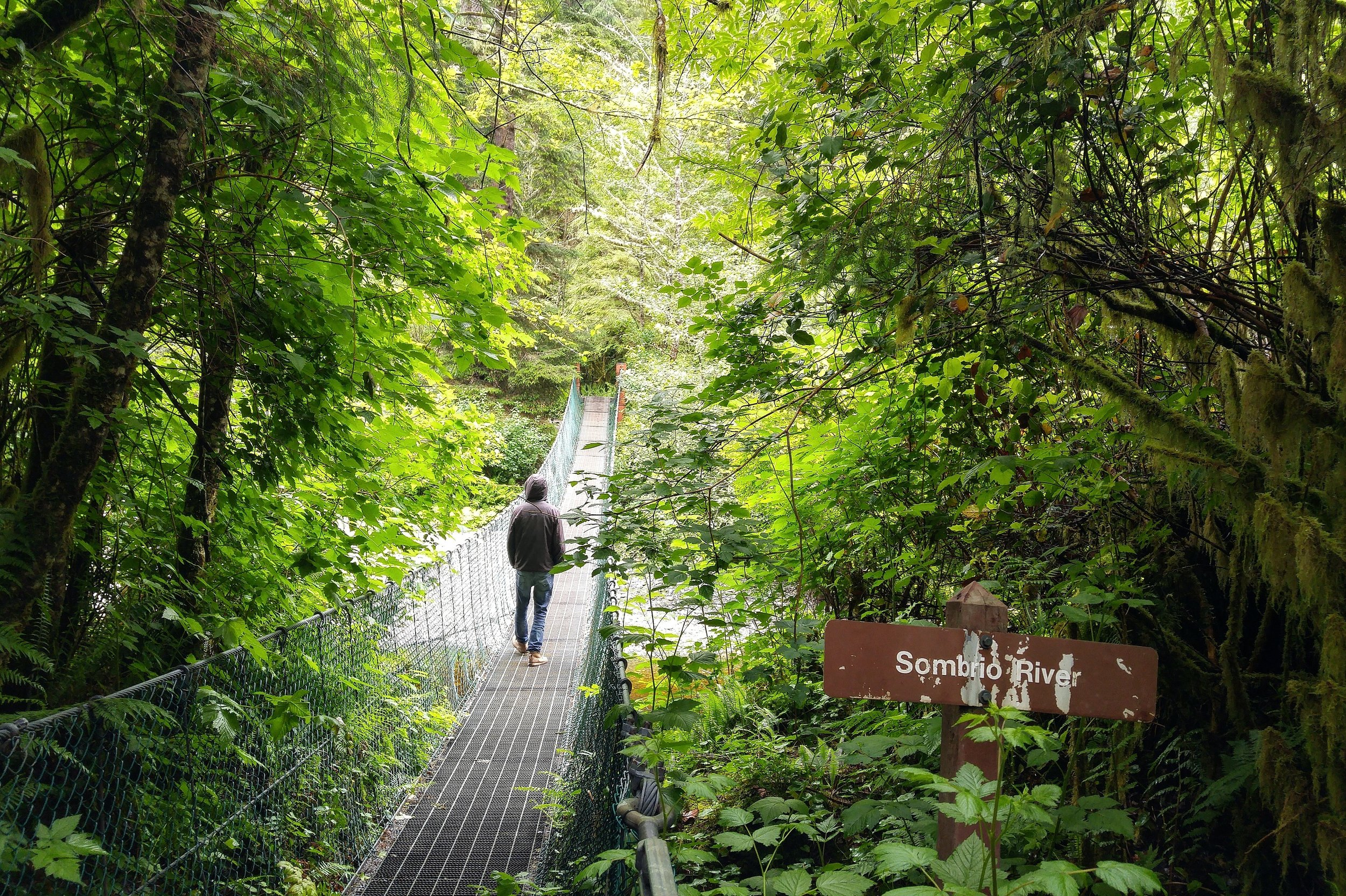 The forest walk that leads to Sombrio beach is something out of a fairytale.
