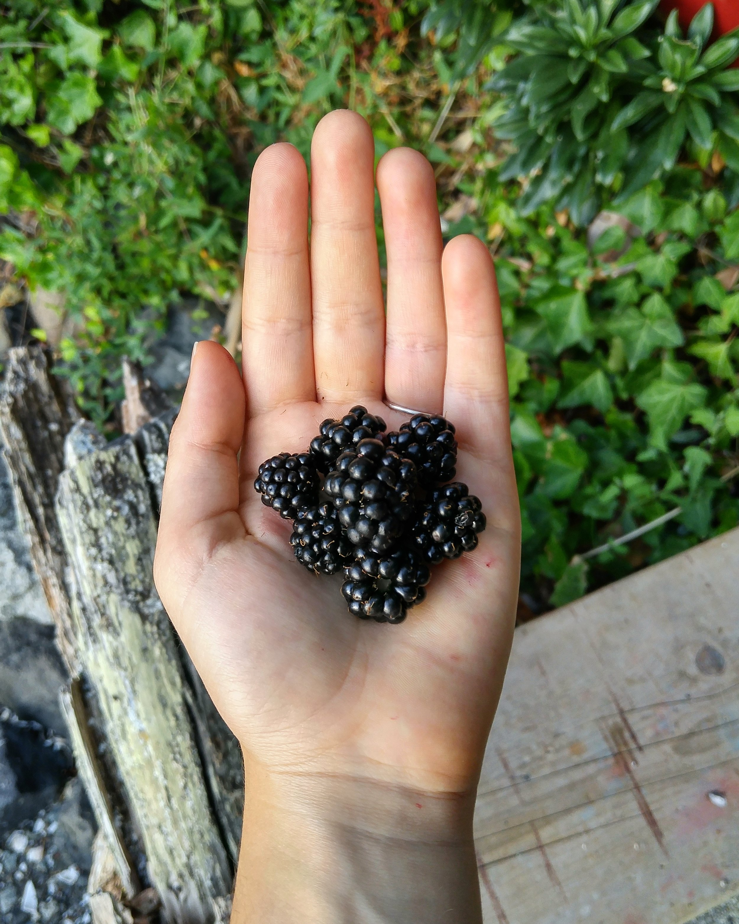 Ripe for the Picking.  Vancouver Island is known for its wild blackberries. In the late summer, they are absolutely  everywhere.