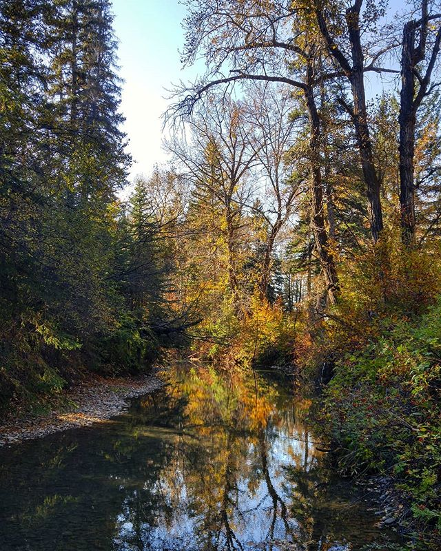 Felt like we stepped into a Thomas Kinkade or something 🎨  #fallcolours #october #creek #reflection #lightandshadow