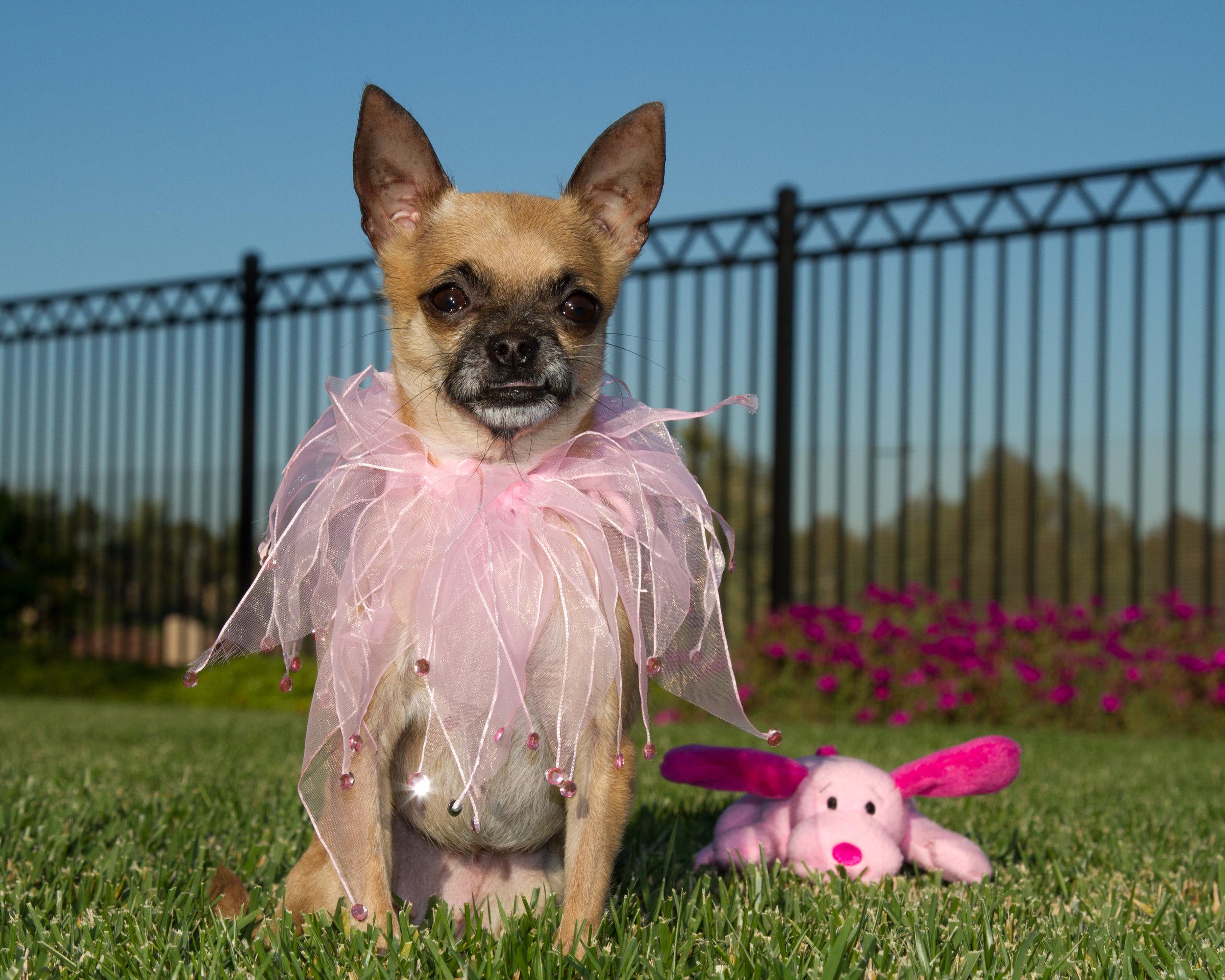 Pink Princess & Pet