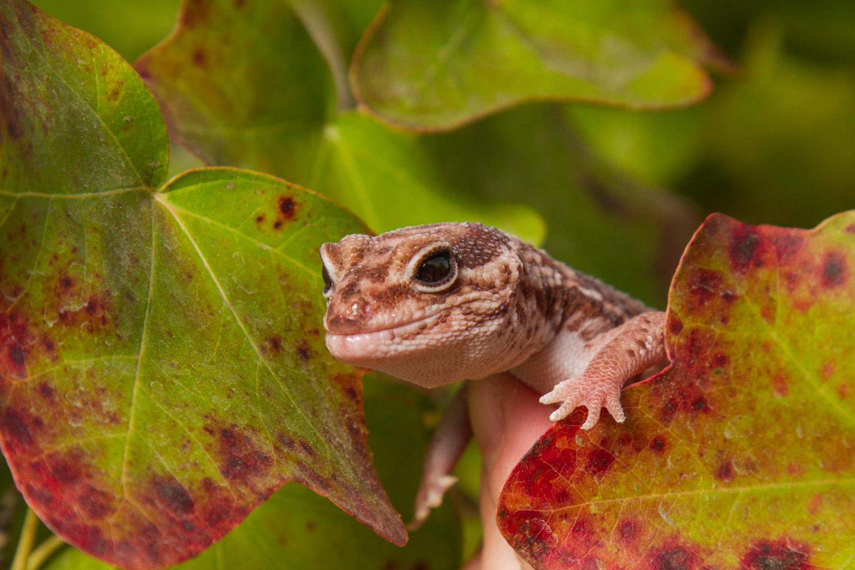 Artie in the Foliage