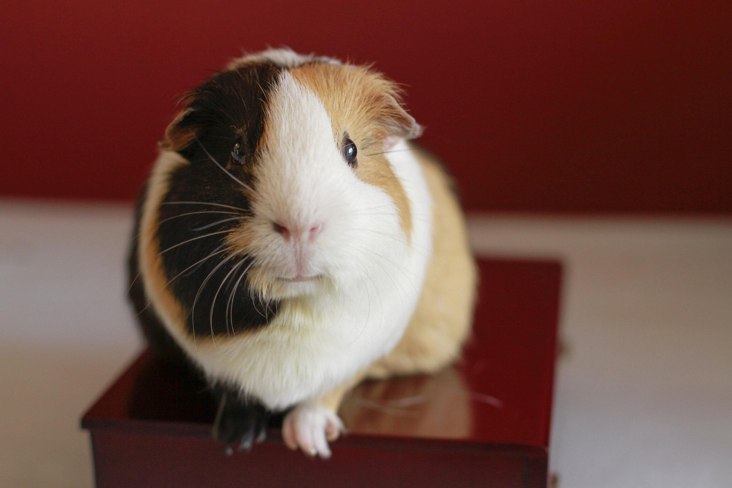 Miss Piggy Superstar
