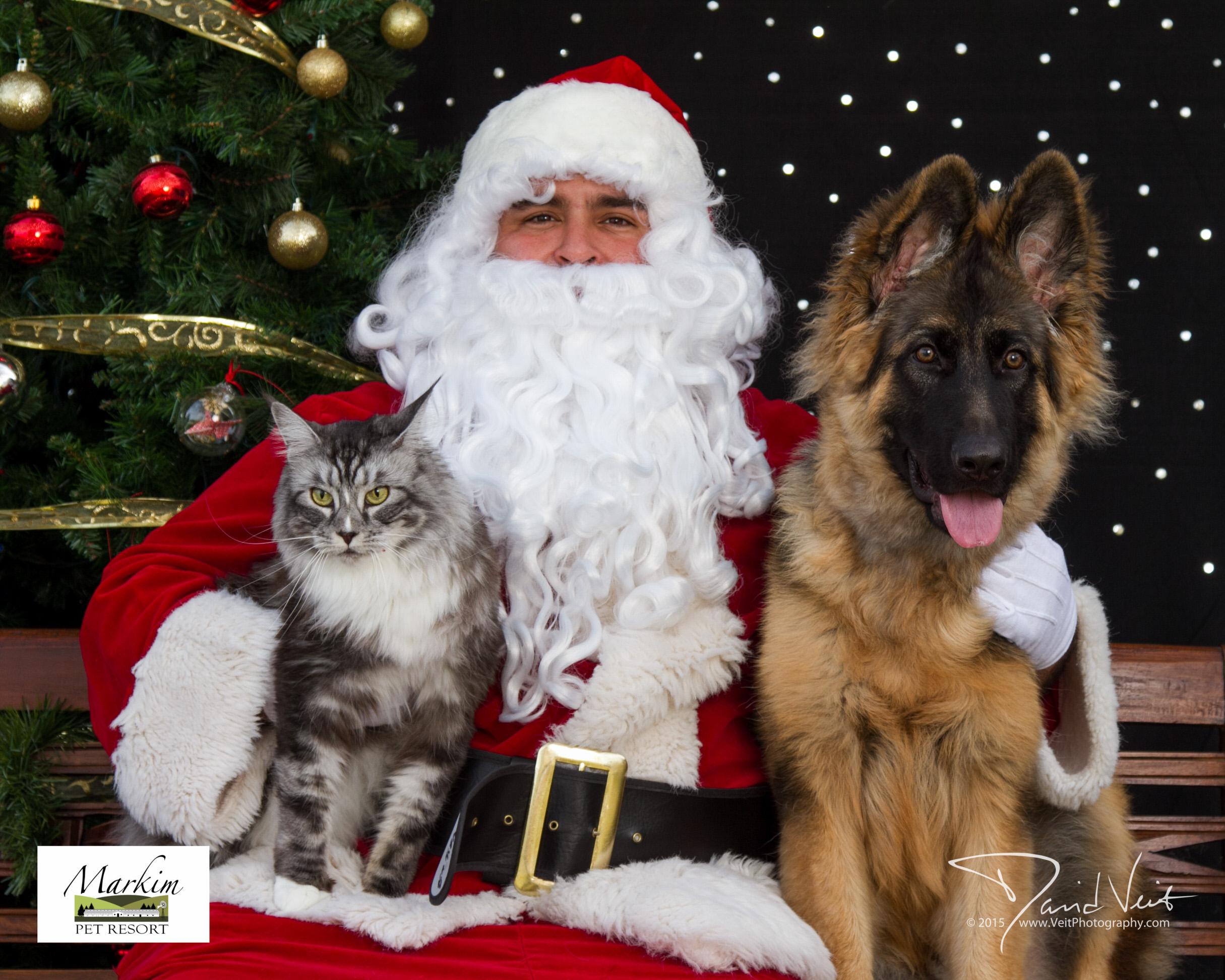 German Shepherd Puppy and Cat with Santa.jpg